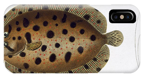 Ichthyology iPhone Case - The Whiff by Andreas Ludwig Kruger