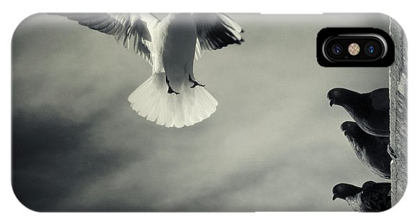 Pigeon iPhone Case - The White And The Blacks by Marco Bianchetti