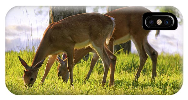 The Whitetail Deer Of Mt. Nebo - Arkansas IPhone Case