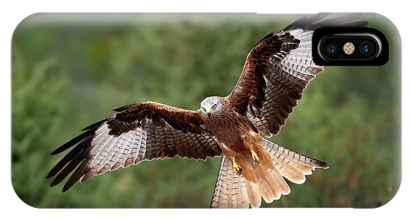Wings iPhone Case - The Wings Of The Red Kite by Nicol??s Merino