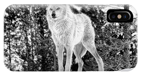 IPhone Case featuring the photograph The Wolf  by Fran Riley