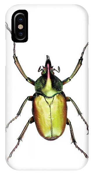 Coleoptera iPhone Case - Theodosia Flower Beetle by Lawrence Lawry