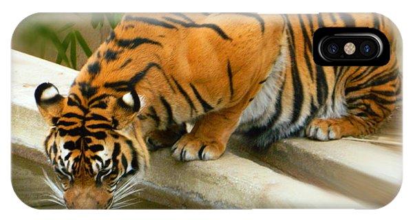 Thirsty Sumatran Tiger IPhone Case