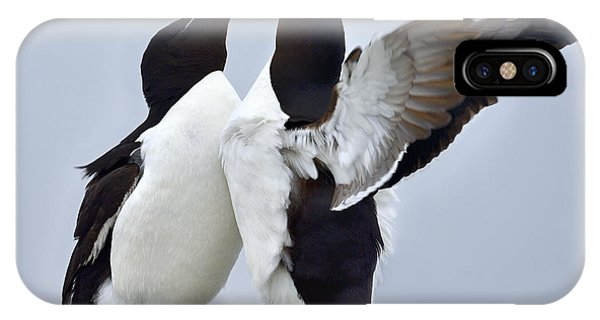 Razorbill iPhone Case - This Much by Tony Beck
