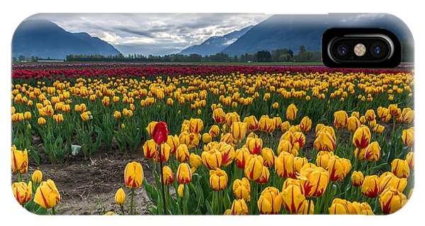 Wheeler Farm iPhone Case - This Years Agassiz Tulip Festival by James Wheeler
