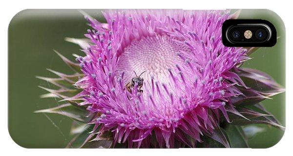 Thistle And The Bee IPhone Case
