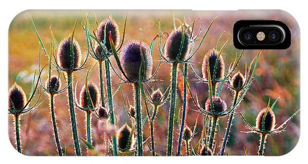 Thistles With Sunset Light IPhone Case