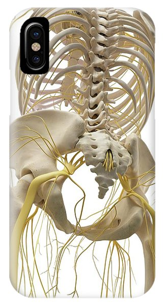 Thoracic Bones And Nerves Phone Case by Sciepro