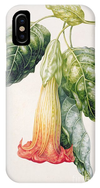 Yellow Trumpet iPhone Case - Thorn Apple Flower From Ecuador Datura Rosei by Augusta Innes Withers