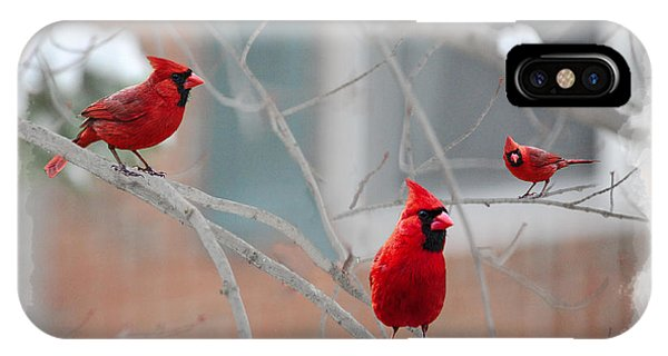 Three Cardinals In A Tree IPhone Case