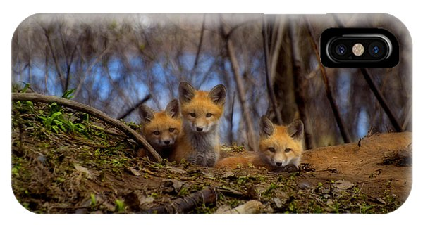 Three Cute Kit Foxes At Attention IPhone Case