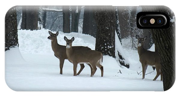 Three Deer In Park IPhone Case