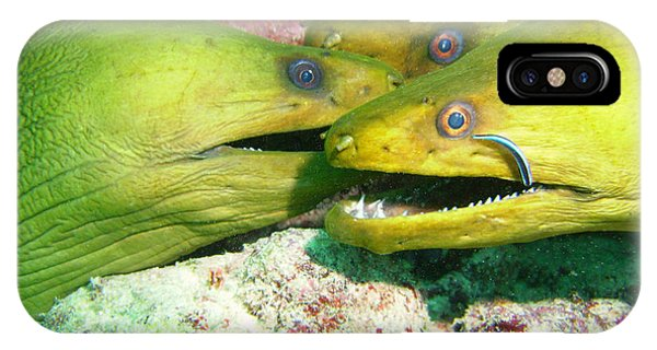 Scuba Diving iPhone Case - Three Eels by Carey Chen