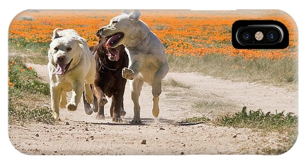 Yellow Lab iPhone Case - Three Labrador Retrievers Running by Zandria Muench Beraldo