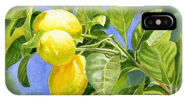 Lemon iPhone Case - Three Lemons by Sharon Freeman