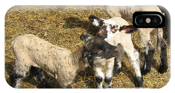 Three Little Lambs In Spring Sunshine IPhone Case