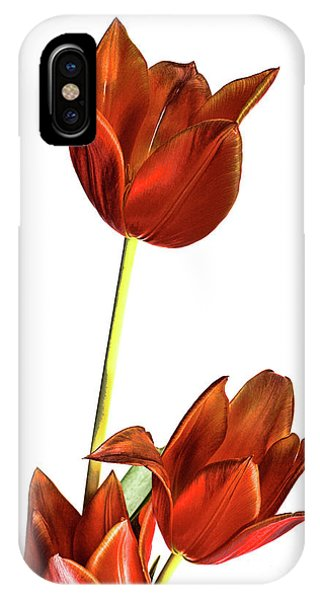 Three Orange Red Tulips IPhone Case