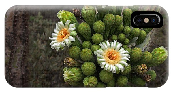 Three Saguaro Blossoms And Many Buds IPhone Case