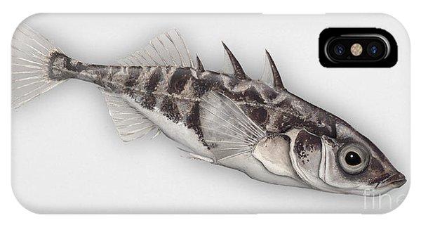 Three-spined Stickleback Gasterosteus Aculeatus - Stichling - L'epinoche - Espinoso - Kolmipiikki IPhone Case