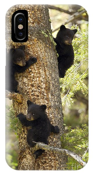 Family Tree IPhone Case