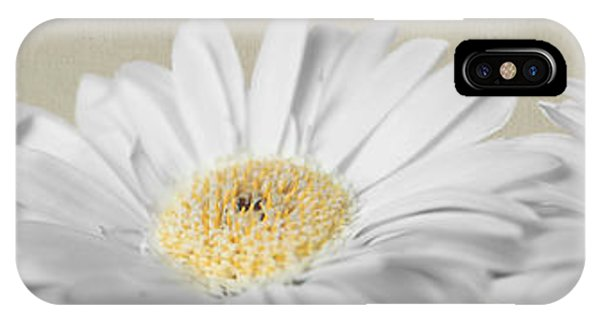 Three White Daisies IPhone Case
