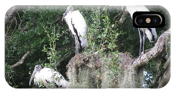 Three Wood Storks IPhone Case