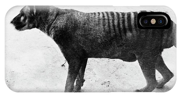 Thylacine IPhone Case