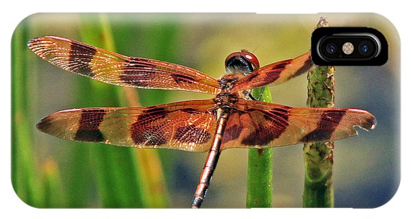 Tiger Dragonfly IPhone Case