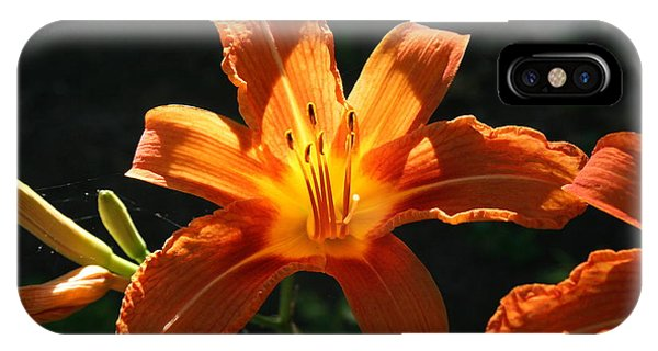 Tiger Lily 1 IPhone Case