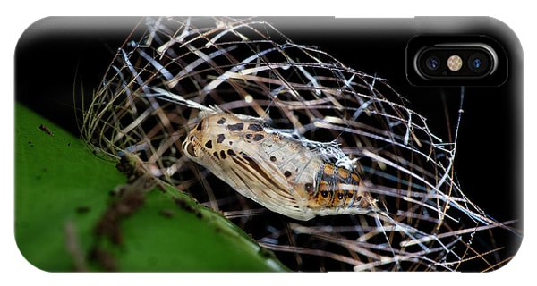 Chrysalis iPhone Case - Tiger Moth Pupa by Melvyn Yeo/science Photo Library