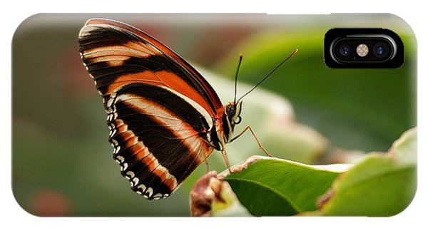 Tiger Striped Butterfly IPhone Case