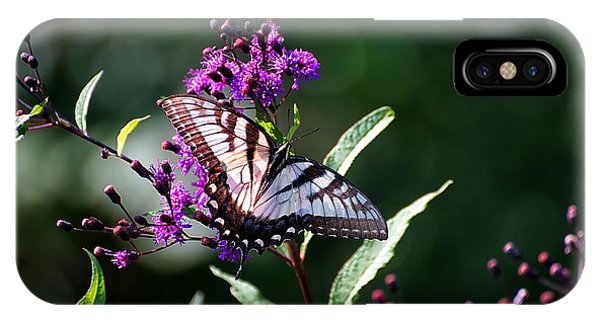 Tiger Swallowtail On Purple IPhone Case