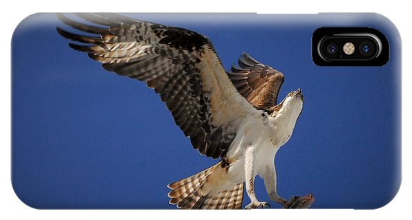 Ospreys iPhone Case - Tight Grip by Quinn Sedam