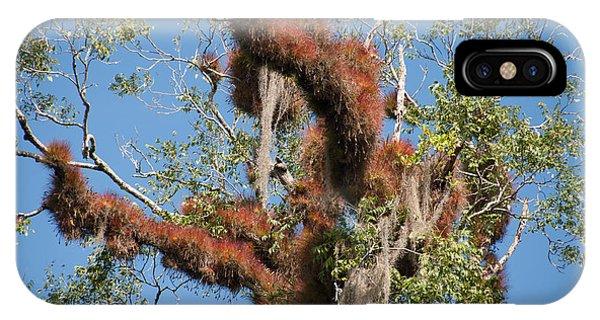 Tikal Furry Tree Closeup IPhone Case