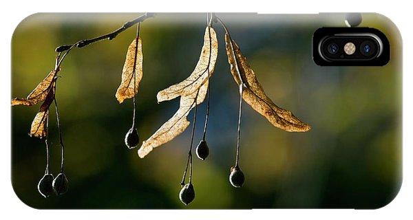 Tilia Platyphyllos Fruit Phone Case by Bob Gibbons