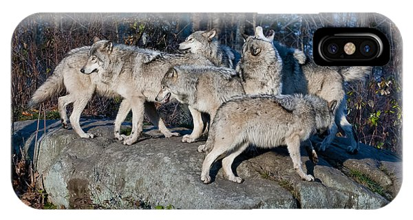 Timber Wolf Pack IPhone Case