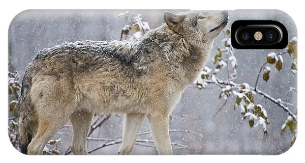 Timber Wolf Pictures 188 IPhone Case