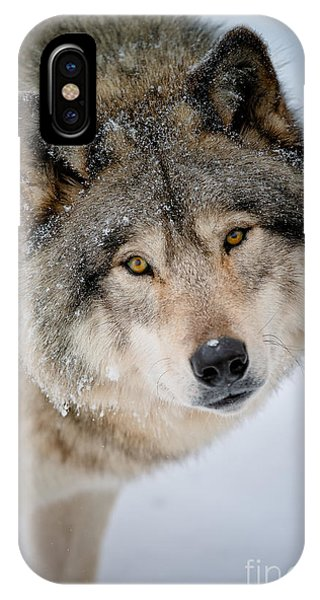 Timber Wolf Pictures 255 IPhone Case