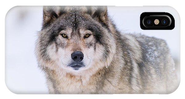 Timber Wolf Pictures 256 IPhone Case