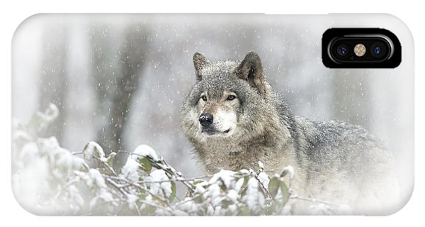 Timber Wolf Pictures 279 IPhone Case