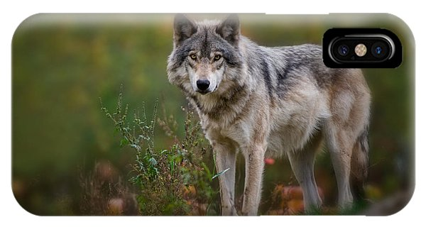 Timber Wolf Pictures 401 IPhone Case