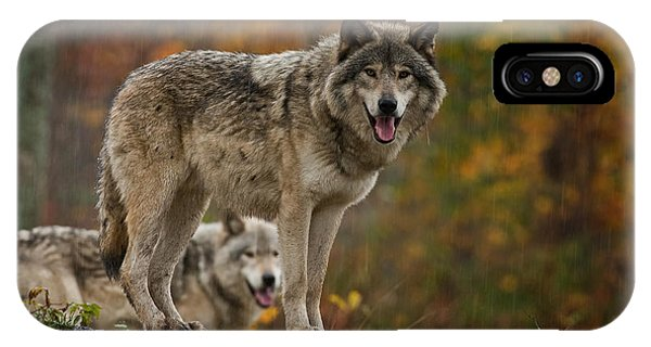 Timber Wolf Pictures 410 IPhone Case