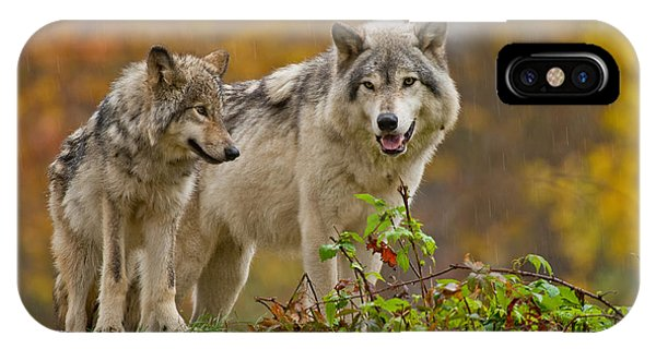 Timber Wolf Pictures 411 IPhone Case