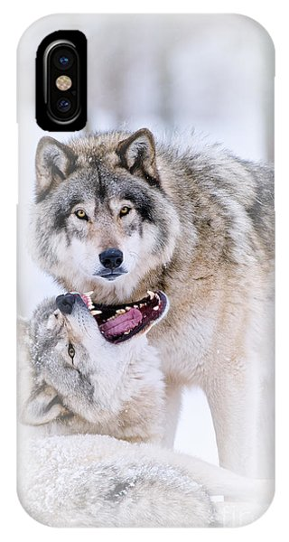 Timber Wolf Pictures 56 IPhone Case
