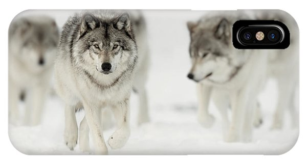 Timber Wolf Pictures 65 IPhone Case