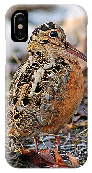 Timberdoodle The American Woodcock IPhone Case