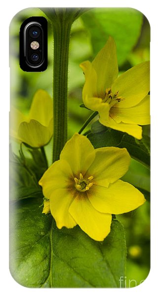 Tiny Blossoms In The Shadows Japanese Variegated Willow Phone Case by Deborah Smolinske