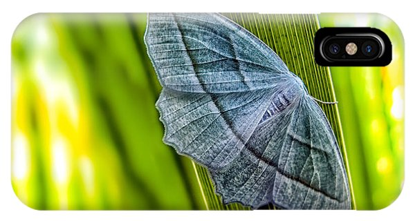 Uplift iPhone Case - Tiny Moth On A Blade Of Grass by Bob Orsillo