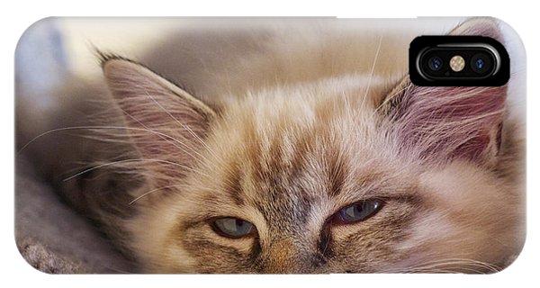Tired Kitten IPhone Case