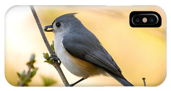 Titmouse iPhone Case - Titmouse In Gold by Shane Holsclaw